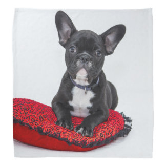Black and White Bulldog Terrier on Red Pillow Bandana
