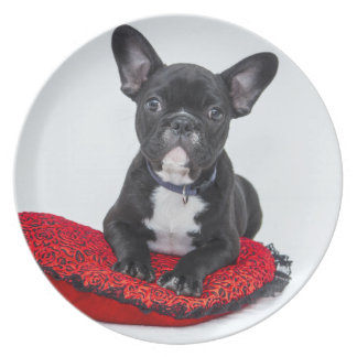 Black and White Bulldog Terrier on Red Pillow Plate