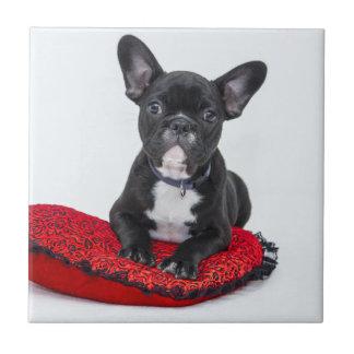 Black and White Bulldog Terrier on Red Pillow Tile