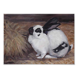 Black and White Bunny Rabbit Animal Art Print