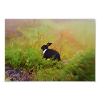 Black And White Bunny Rabbit In Colorful Foliage Poster