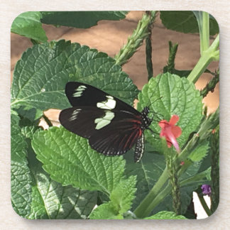Black and white butterfly beauty coaster
