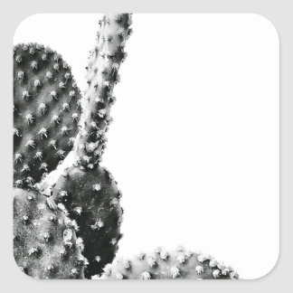 Black and White cactus black and blank Square Sticker