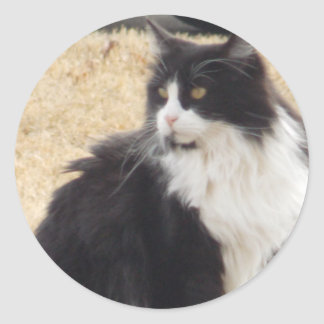 black and white cat classic round sticker