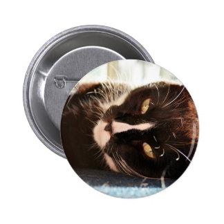 black and white cat face animal photo yellow eyes pin