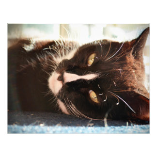 black and white cat face animal photo yellow eyes full color flyer