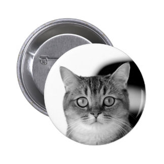 Black and white cat looking straight at you 2 inch round button