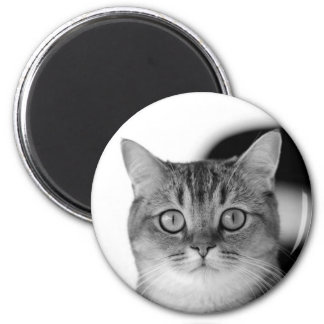 Black and white cat looking straight at you 2 inch round magnet