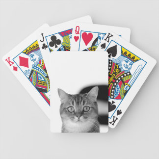 Black and white cat looking straight at you bicycle playing cards