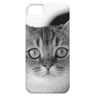Black and white cat looking straight at you case for the iPhone 5