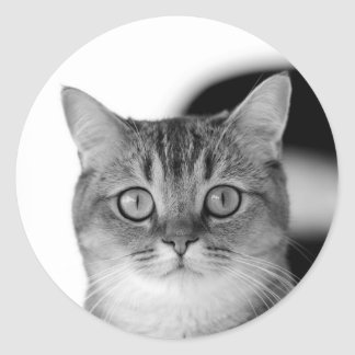 Black and white cat looking straight at you classic round sticker