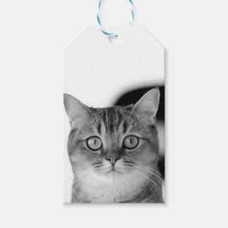 Black and white cat looking straight at you gift tags