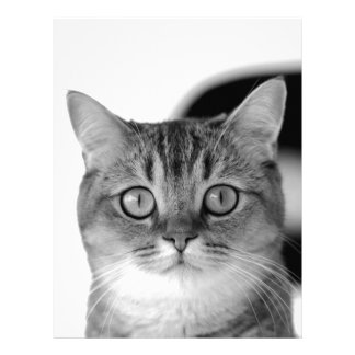 Black and white cat looking straight at you letterhead template