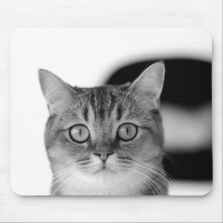 Black and white cat looking straight at you mouse pad