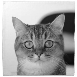Black and white cat looking straight at you napkin