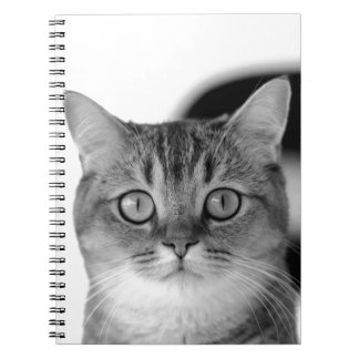 Black and white cat looking straight at you spiral notebooks