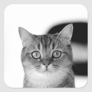 Black and white cat looking straight at you square sticker