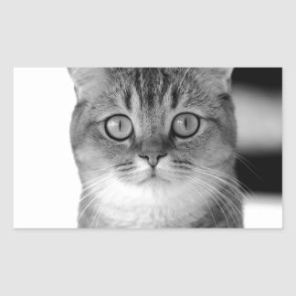 Black and white cat looking straight at you sticker