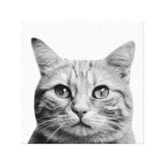 Black and white cat pet animal puppy photo canvas print