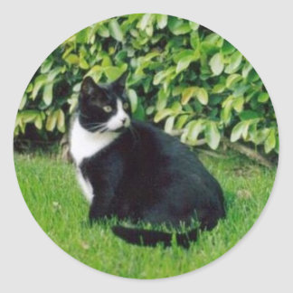 Black and White Cat Round Sticker