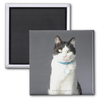 Black and white cat square magnet