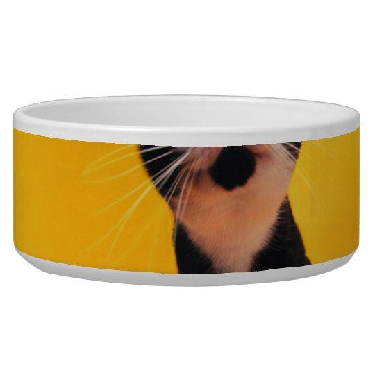 Black and white cat-tuxedo cat-pet kitten-pet cat