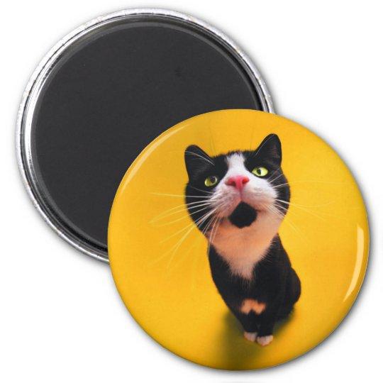 Black and white cat-tuxedo cat-pet kitten-pet cat 2 inch round magnet