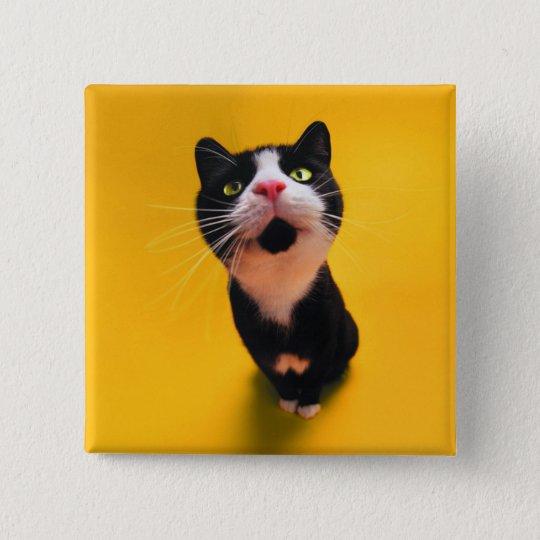Black and white cat-tuxedo cat-pet kitten-pet cat 2 inch square button