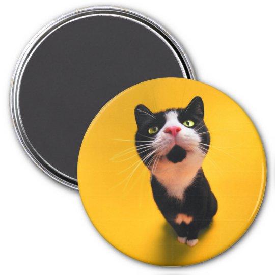 Black and white cat-tuxedo cat-pet kitten-pet cat 3 inch round magnet
