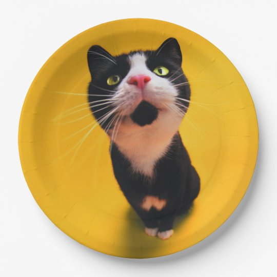Black and white cat-tuxedo cat-pet kitten-pet cat 9 inch paper plate
