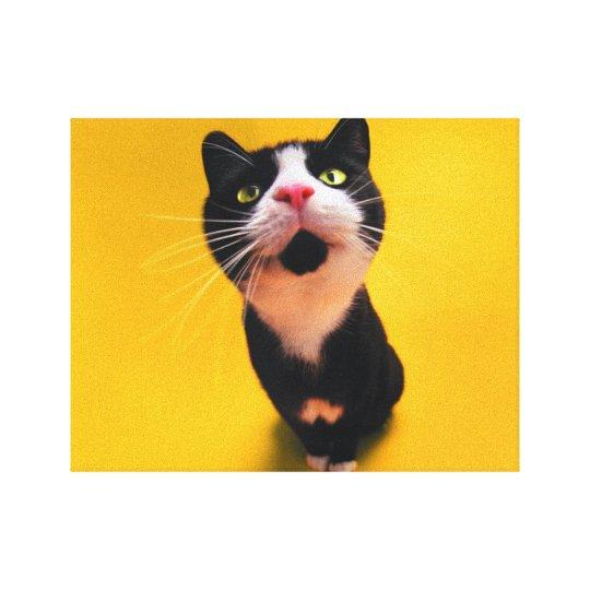 Black and white cat-tuxedo cat-pet kitten-pet cat canvas print