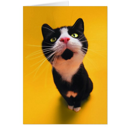 Black and white cat-tuxedo cat-pet kitten-pet cat card