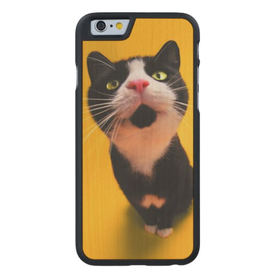 Black and white cat-tuxedo cat-pet kitten-pet cat carved maple iPhone 6 case