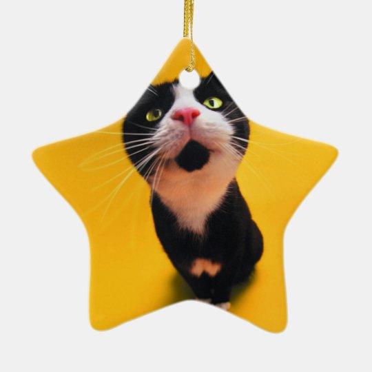 Black and white cat-tuxedo cat-pet kitten-pet cat ceramic star ornament