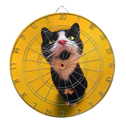 Black and white cat-tuxedo cat-pet kitten-pet cat dart board