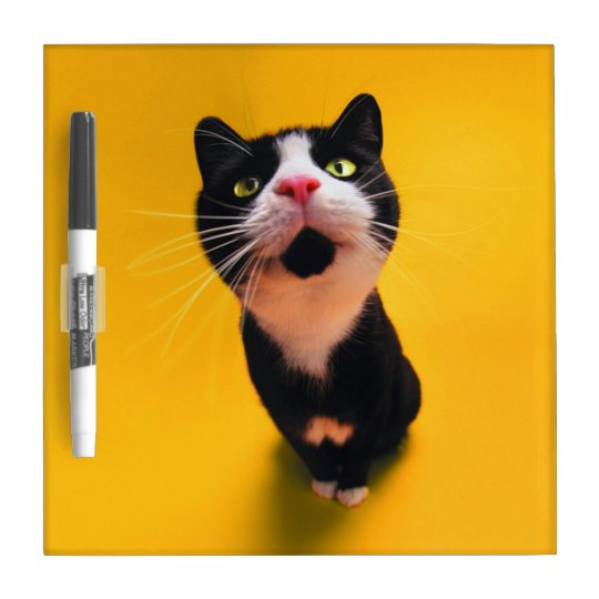 Black and white cat-tuxedo cat-pet kitten-pet cat Dry-Erase whiteboards