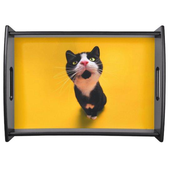 Black and white cat-tuxedo cat-pet kitten-pet cat food tray