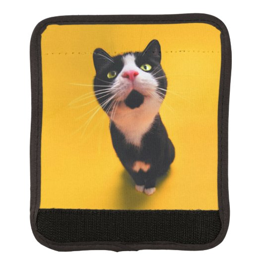 Black and white cat-tuxedo cat-pet kitten-pet cat handle wrap
