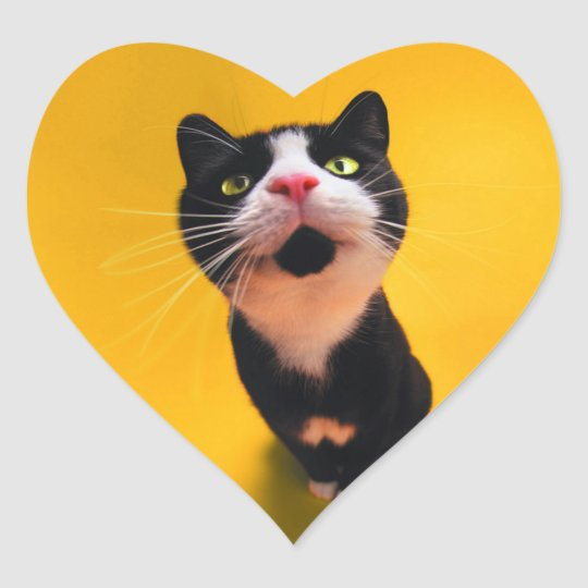 Black and white cat-tuxedo cat-pet kitten-pet cat heart sticker