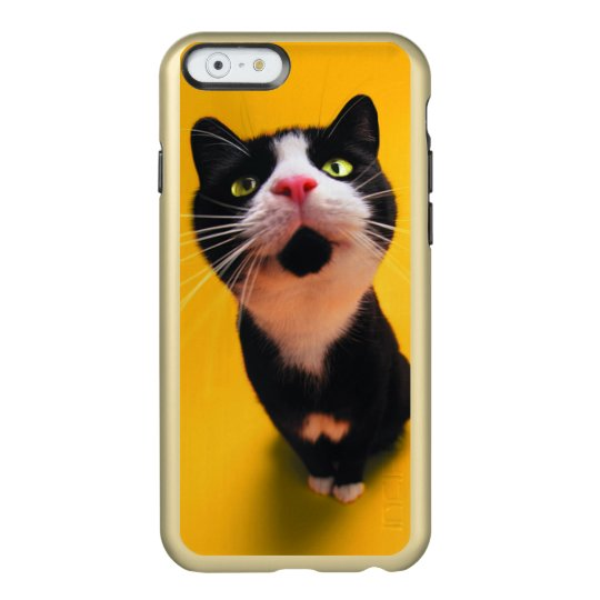 Black and white cat-tuxedo cat-pet kitten-pet cat incipio feather® shine iPhone 6 case