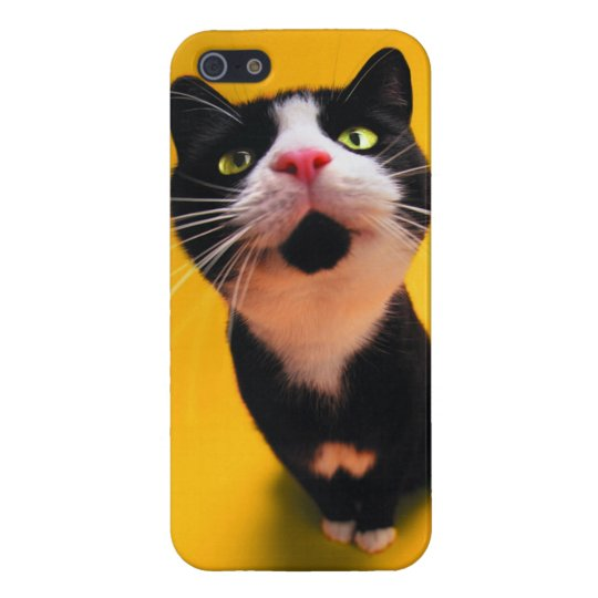 Black and white cat-tuxedo cat-pet kitten-pet cat iPhone 5 cases