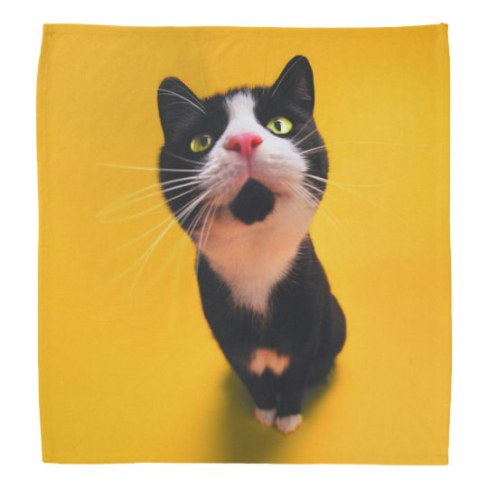 Black and white cat-tuxedo cat-pet kitten-pet cat kerchief