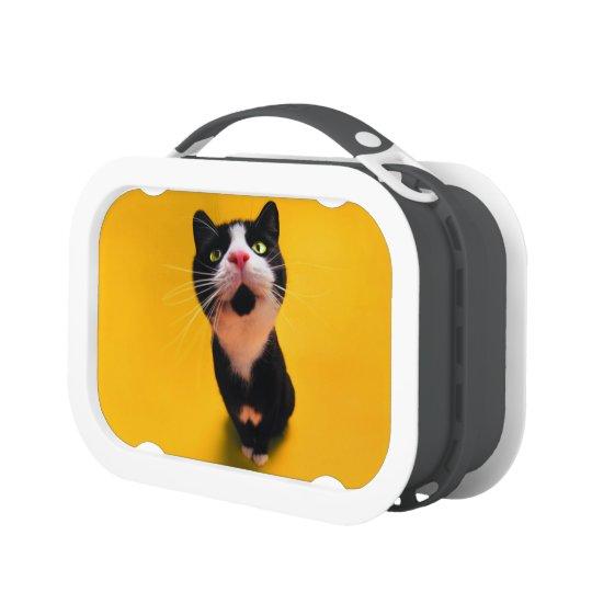 Black and white cat-tuxedo cat-pet kitten-pet cat lunchboxes