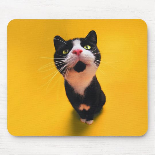 Black and white cat-tuxedo cat-pet kitten-pet cat mouse pad