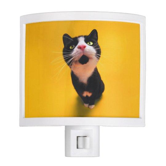 Black and white cat-tuxedo cat-pet kitten-pet cat nite light