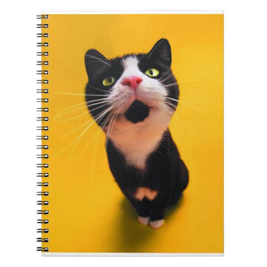 Black and white cat-tuxedo cat-pet kitten-pet cat notebook