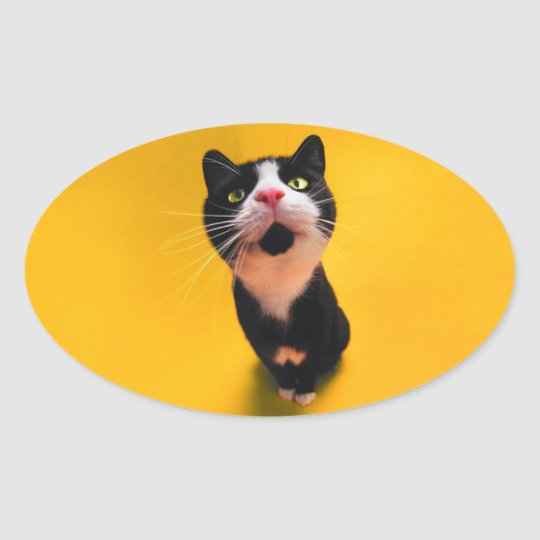 Black and white cat-tuxedo cat-pet kitten-pet cat oval sticker