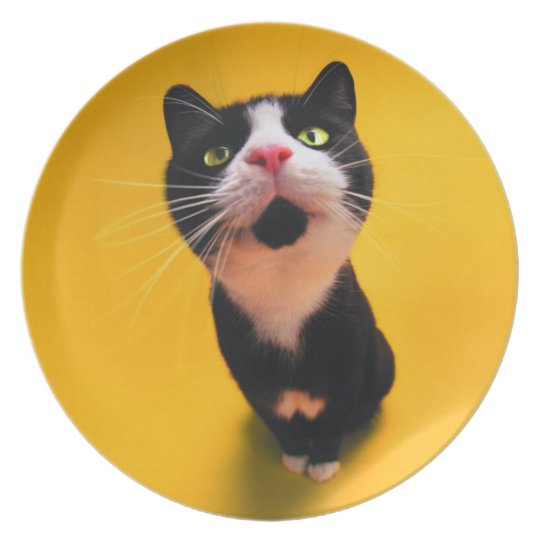 Black and white cat-tuxedo cat-pet kitten-pet cat party plate