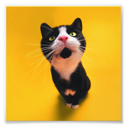 Black and white cat-tuxedo cat-pet kitten-pet cat photo print