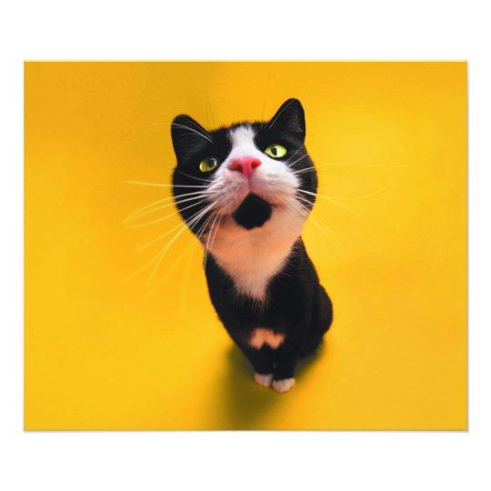 Black and white cat-tuxedo cat-pet kitten-pet cat photo print
